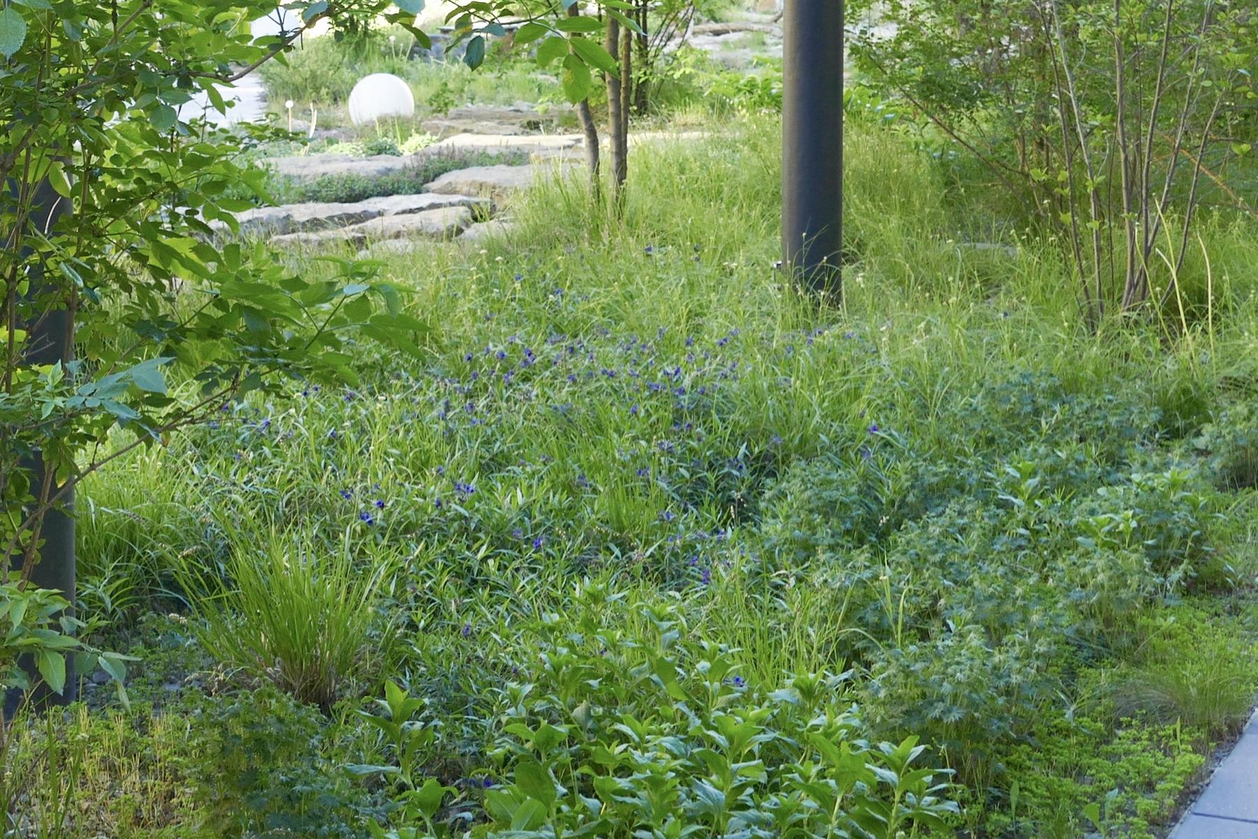 Projekt Kärcher Mai Purpurblaue steinsame im Schattigen Bereich, Waldrandstimmung 2017